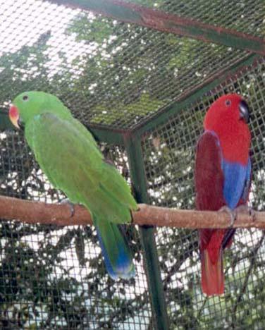 papagaio-v-3